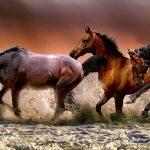 Удивительные факты о лошадях