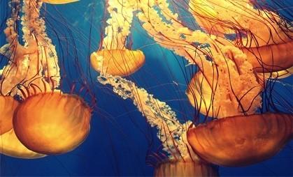 Любопытные факты о медузах