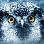 Завести сову в доме — возможно ли это?