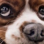 Почему меняет цвет собачий нос?