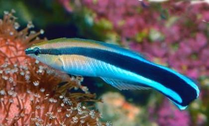 Учёные выяснили: рыбы умнее, чем вам казалось