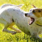 Почему собака много лает?