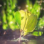 Как посадить рассаду в чайные пакетики?