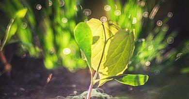 Фототропизм: как растения двигаются?