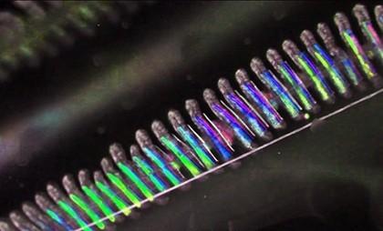 Гребневики - живые самоцветы морских глубин