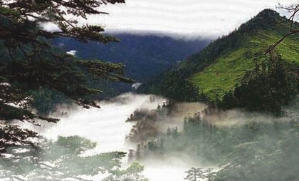 Долина чёрного бамбука