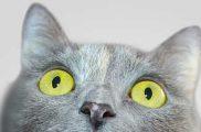 20 странных фактов о кошках