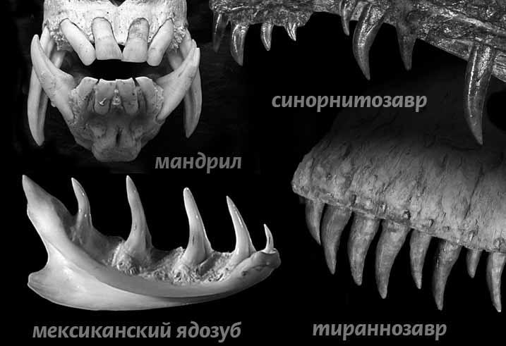 динозавр зубы