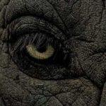 История о печальных слонах