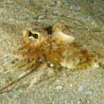 Самые интересные и экзотические обитатели Чёрного моря
